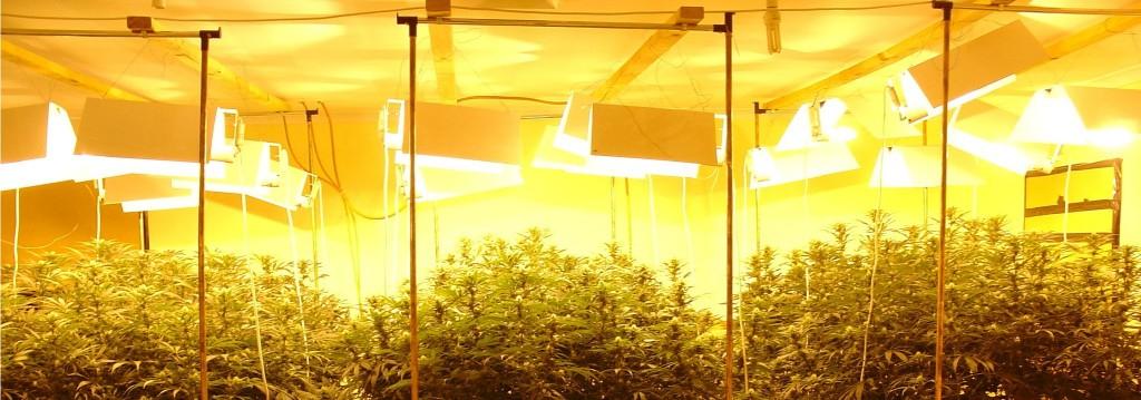 Лампы используемые при выращивании конопли есть ли статья за употребление марихуаны