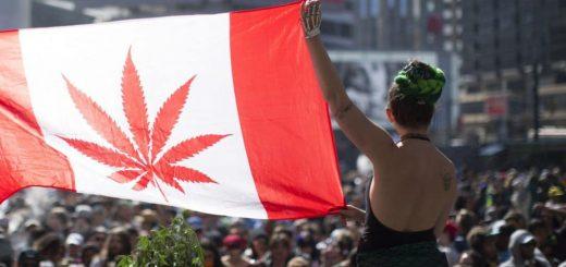 Флаг канады с изображением конопли