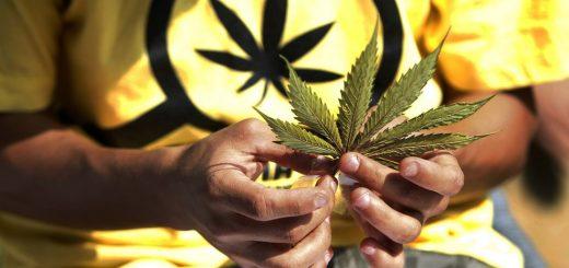 list-marihuany-v-rukah