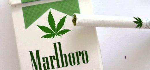 Мальборо выпускает сигареты из конопли