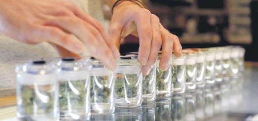 законы-выращивания-марихуаны