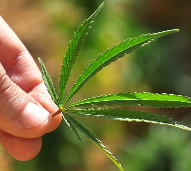 марихуана-новости-каннабис-тгк-кбд-thc-cbd-кбд