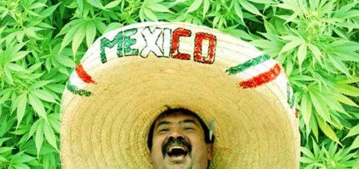 законы- выращивания-марихуаны
