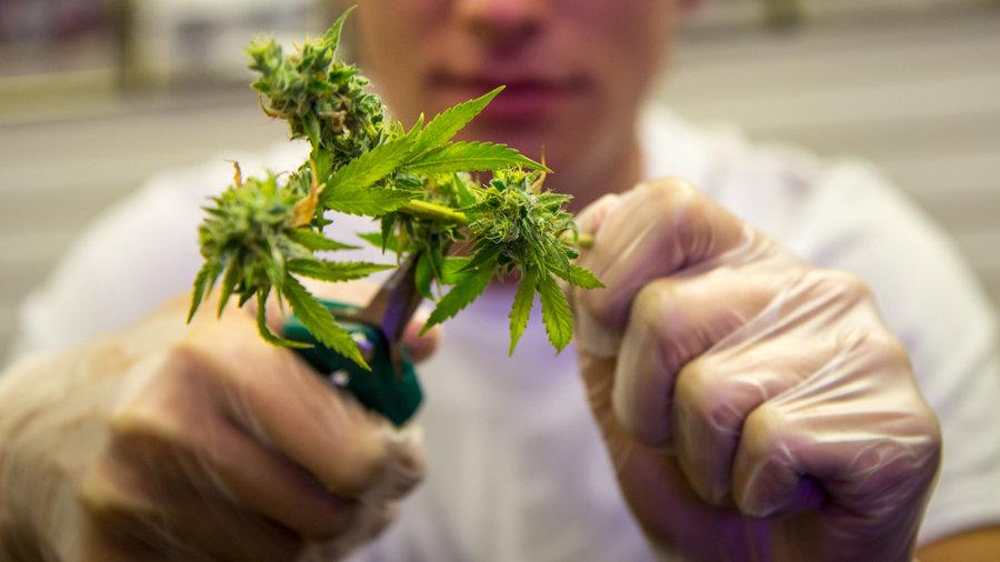 марихуана-высокий-тгк-кбд